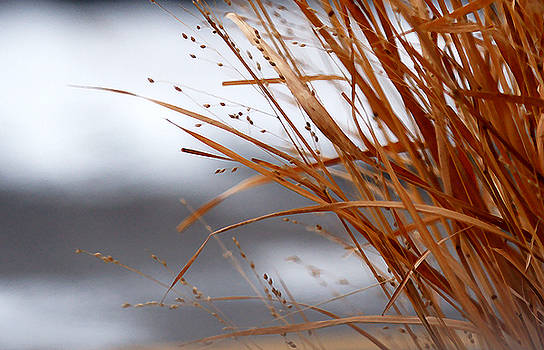 Linda Shafer - Winter Grass - 2