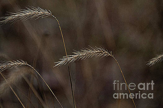 Winter grasses by Jim Wright
