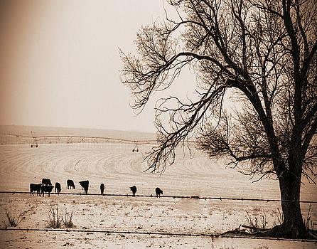 Winter Graze by Nadine Berg