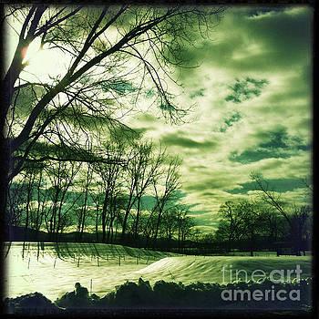 Onedayoneimage Photography - Winter Green