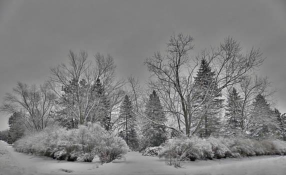 Winter Harmony by Teresa Schomig