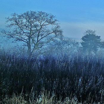 Winter Hedgerow by Anne Kotan