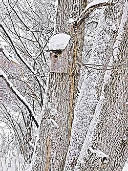 Brenda Plyer - Winter Home 1