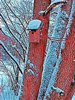 Brenda Plyer - Winter Home 2