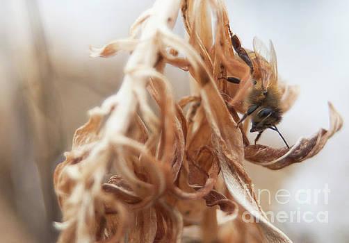 Erin Thomas - Winter Honey Bee