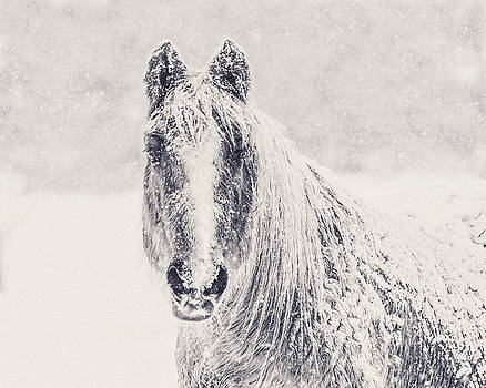 Winter Horse by Debi Bishop