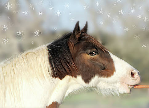 Winter Horse by Mary Vandenberg