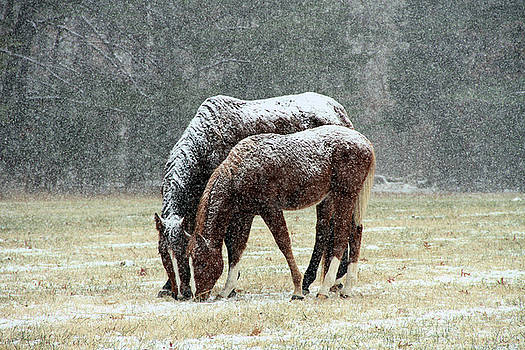Winter Horses Color by Troy  Skebo