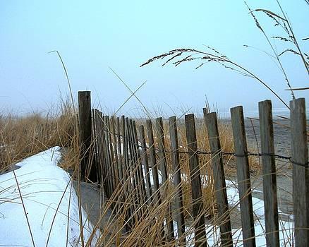 DazzleMe Photography - Winter Impressions