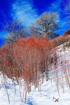 Winter in Colorado by Michael Moriarty