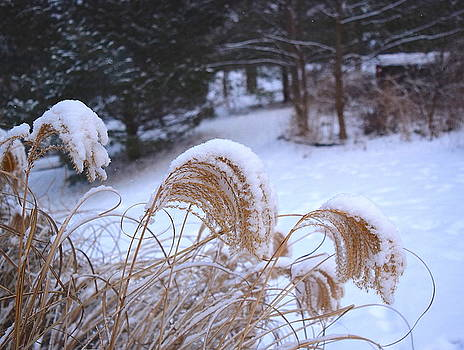 Winter in Ridgefield by Inessa Williams