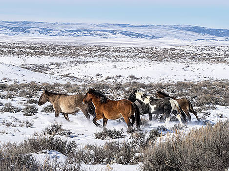 Winter in Sand Wash Basin - Wild Mustangs on the Run by Nadja Rider
