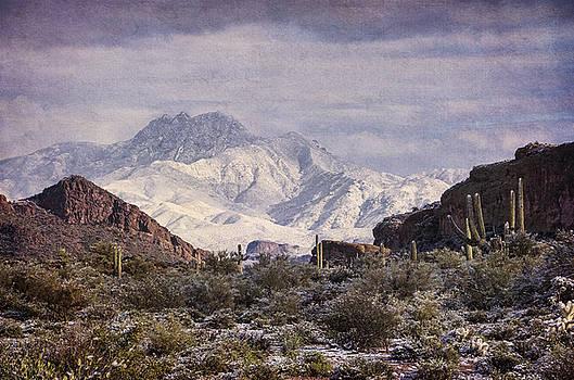 Saija Lehtonen - Winter in the Sonoran Desert