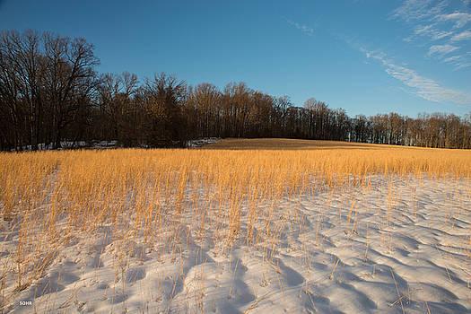 Dana Sohr - Winter Landscape 1