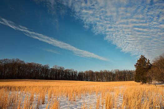 Dana Sohr - Winter Landscape 2