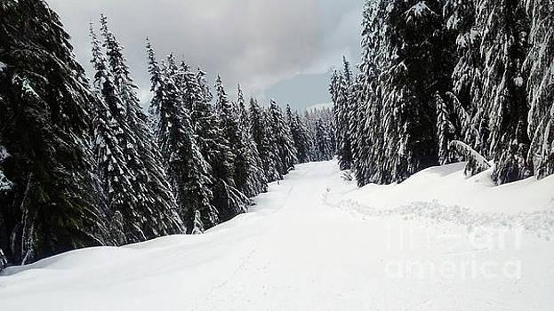 Winter Landscape by Bill Thomson