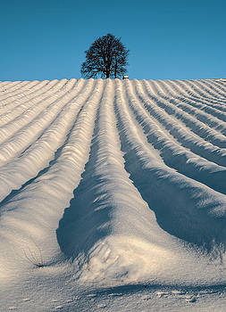 Winter landscape 4 by Livio Ferrari