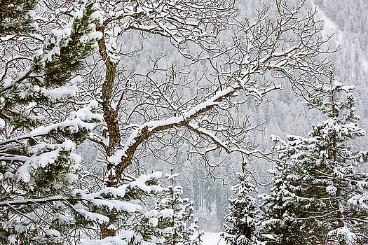 Art Block Collections - Winter Landscape Watercolor
