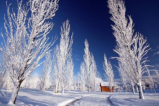 Winter Landscape by Wesley Aston