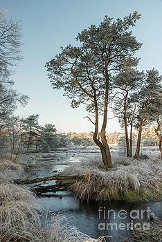 Compuinfoto - winter landscape with trees and water