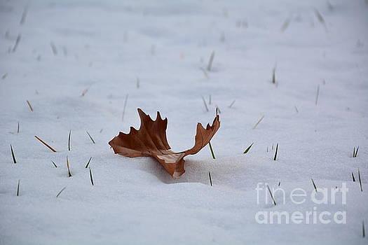 Winter Leaf by Sonya Staneva