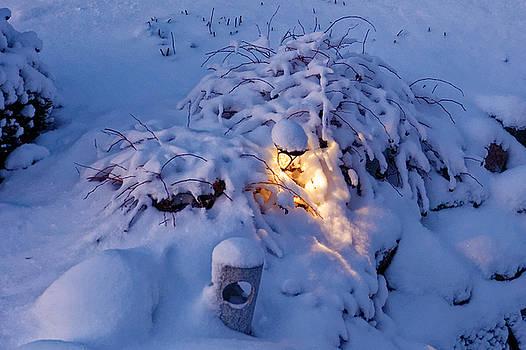 Winter light by Peter Ponzio