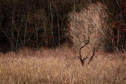 Winter Light by Robert Mitchell