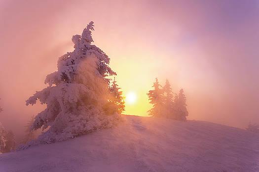Winter light by Toma Bonciu