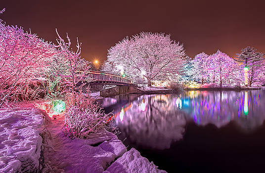Winter Lights at Bowring Park by Gord Follett