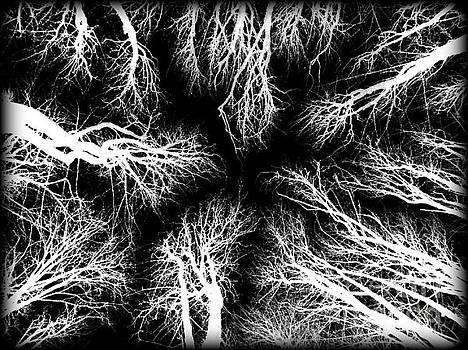 Winter Lights by Eve Penman
