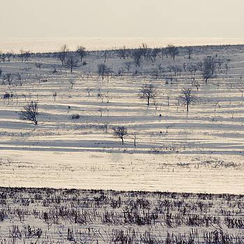 Winter lines by Dumitru Carpov