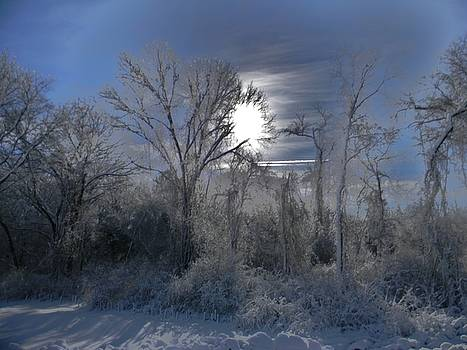 Winter Majesty by Diane Valliere