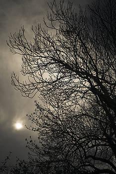 Winter by Maria Heyens