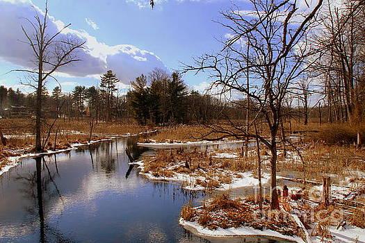 Winter Marsh by Lennie Malvone