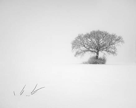 Winter minimalism by Davorin Mance