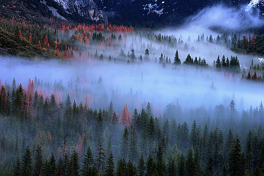 Valley Stream, Yosemite Mist and Trees by Vincent James