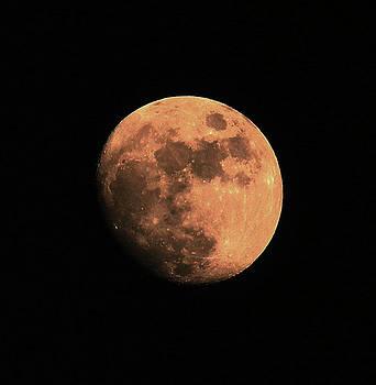 Winter Moon by Rowana Ray