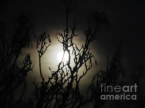 Winter Moon by Silken Photography