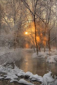 Winter morn by Sue Midlock
