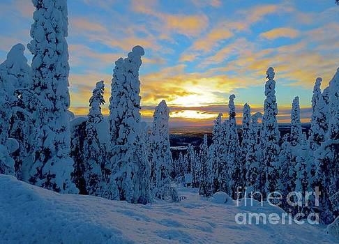 Winter morning by Irina Hays