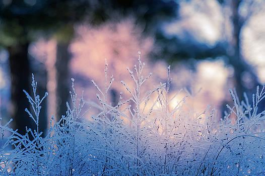 Winter Morning Light by Allin Sorenson