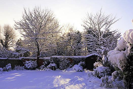 Winter Morning by Tony Murtagh