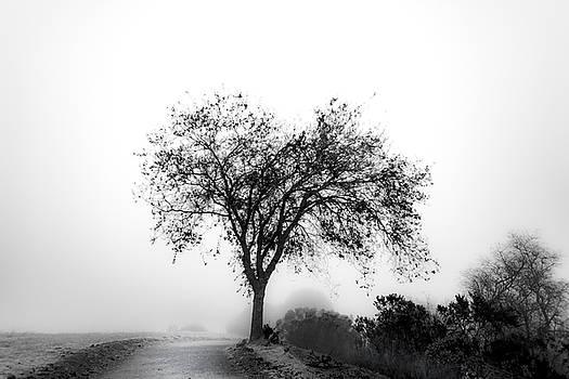 Winter Morning Trail by Daniel Danzig