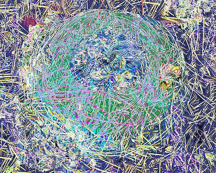 Winter Nest by Joanna  Katz