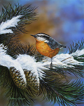 Winter Nuthatch by Anthony J Padgett