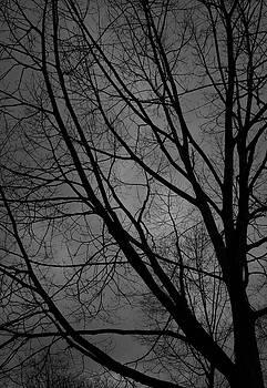 Winter Oak by Digartz - Thom Williams