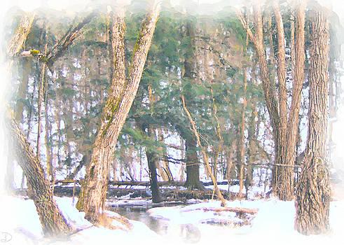 Winter Oasis by Debi Dmytryshyn