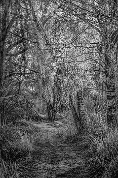 Winter Path BW #h1 by Leif Sohlman
