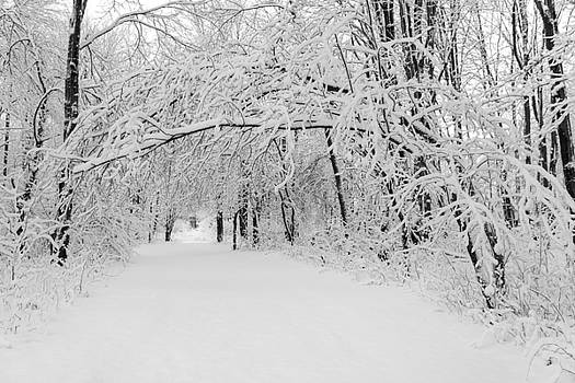 Chris Bordeleau - Winter Path