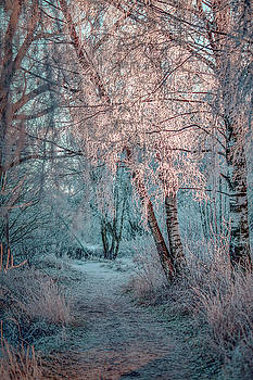 Winter path #h1 by Leif Sohlman